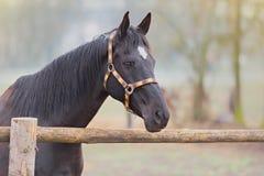 Retrato bonito do cavalo Fotografia de Stock Royalty Free