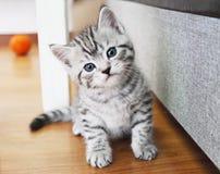 Retrato bonito do gatinho Imagem de Stock Royalty Free