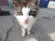 Retrato bonito do gato imagens de stock