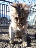 Retrato bonito do gato imagens de stock royalty free