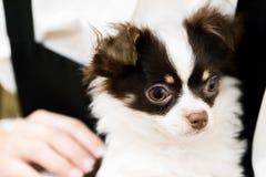 Retrato bonito preto e branco do cachorrinho fotografia de stock royalty free