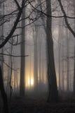 Retrato brumoso del arbolado de la mañana Imagen de archivo