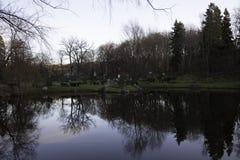 Retrato cênico das árvores refletidas na água Imagens de Stock