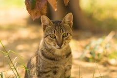 Retrato cinzento bonito do gato contra um fundo agradável Fotos de Stock Royalty Free