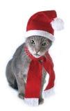 Retrato cinzento do gato do Natal Imagens de Stock Royalty Free