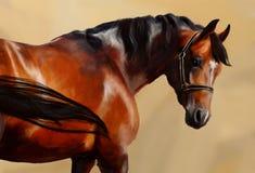 Retrato clássico do cavalo ilustração royalty free