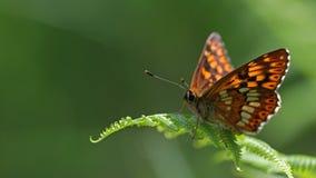 Retrato colorido da borboleta Fotos de Stock