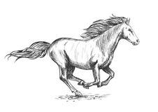 Retrato corriente del bosquejo del caballo blanco del galope Imagenes de archivo