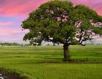 Retrato da árvore Imagem de Stock Royalty Free