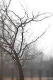 Retrato da árvore após a chuva Fotografia de Stock Royalty Free