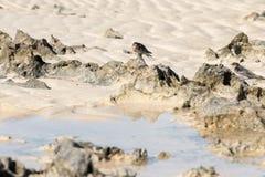 Retrato da andorinha na praia da baía do tubarão foto de stock royalty free