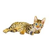 Retrato da aquarela do gato do serengeti com pontos, listras no fundo branco Animal de estimação home doce detalhado tirado mão imagens de stock royalty free