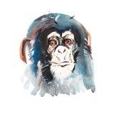 Retrato da aquarela do macaco peludo cinzento Aquarelle que tira o símbolo 2016 Imagens de Stock Royalty Free