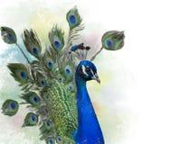Retrato da aquarela do pavão Imagem de Stock Royalty Free