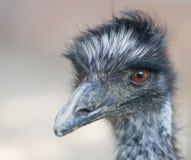 Retrato da avestruz Imagens de Stock