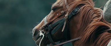 Retrato da cabeça de cavalo no fundo natural fotos de stock