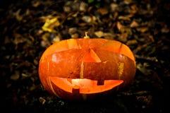 Retrato da cabeça de Pumpking Fotografia de Stock