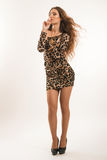 Retrato da fôrma da menina moreno nova no vestido do leopardo Imagem de Stock