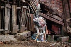 Retrato da galinha Javanese Jago, que forrageia fotografia de stock royalty free
