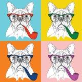 Retrato da imagem do cão nos vidros e com tubulação de cigarro Ilustração do vetor do estilo do pop art Fotos de Stock Royalty Free