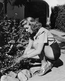 Retrato da jardinagem da mulher (todas as pessoas descritas não são umas vivas mais longo e nenhuma propriedade existe Garantias  Imagens de Stock Royalty Free