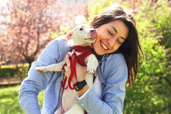 Retrato da jovem mulher atrativa que abraça o cachorrinho bonito do terrier de russell do jaque no parque, gramado verde, fundo d Fotografia de Stock