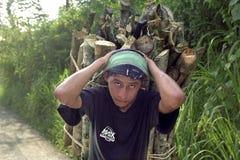 Retrato da lenha levando adolescente do Latino na cabeça Fotos de Stock
