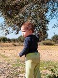 Retrato da menina da criança de 2 anos perto de uma oliveira imagem de stock royalty free