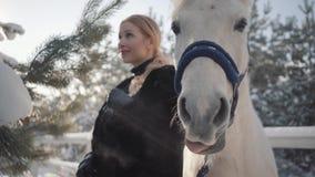 Retrato da menina loura bonita com o cavalo branco do puro-sangue perto do fim da cerca acima Jovem mulher que joga com seu branc video estoque