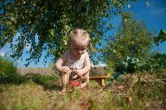 Retrato da menina loura com maçãs vermelhas Imagens de Stock