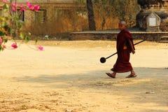 Retrato da monge nova Foto de Stock