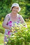 Retrato da mulher da idade da reforma ao jardinar imagens de stock