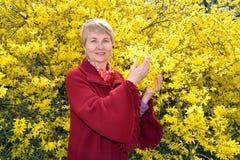 Retrato da mulher de cinquenta anos na perspectiva da forsítia de florescência imagens de stock royalty free