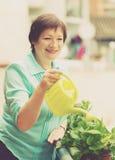 Retrato da mulher madura que molha plantas domésticas Imagens de Stock