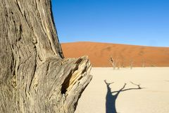 Retrato da silhueta da árvore inoperante no deadvlei, Sossusvlei, parque nacional Namíbia de Namib Naukluft fotos de stock