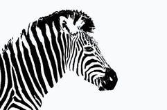 Retrato da zebra ilustração do vetor