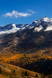 Retrato das folhas em mudança de Autumn Trees na frente de uma montanha coberto de neve com azul claro fotografia de stock