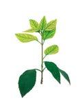 Retrato das plantas Foto de Stock Royalty Free
