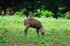 Retrato de ciervos Fotografía de archivo libre de regalías