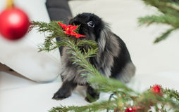 Retrato de comer do coelho Imagens de Stock Royalty Free