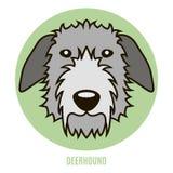 Retrato de Deerhound Ilustração do vetor no estilo do plano Fotografia de Stock Royalty Free