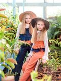 Retrato de dos muchachas de novias en un verano fotografía de archivo libre de regalías