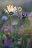 Retrato de flores selvagens Fotos de Stock