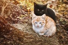 Retrato de gatitos foto de archivo libre de regalías