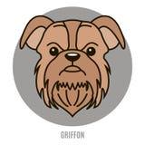 Retrato de Griffon Ejemplo del vector en el estilo del plano Fotografía de archivo