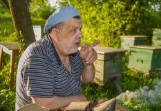 Retrato de hablar al hombre mayor - apicultor Imagen de archivo libre de regalías