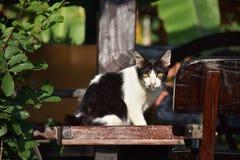 Retrato de Kitty Fotografía de archivo