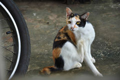 Retrato de Kitty Imagenes de archivo
