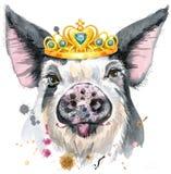 Retrato de la acuarela del cerdo imágenes de archivo libres de regalías