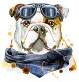 Retrato de la acuarela del dogo libre illustration